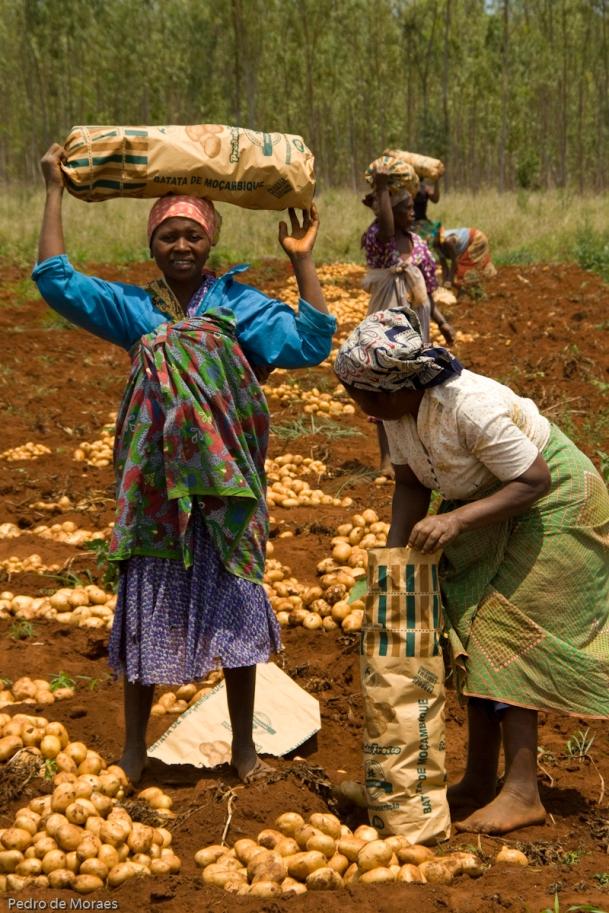 Proyecto Farmers Club en Mozambique